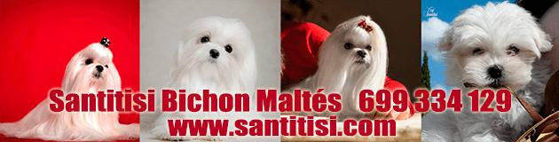 Criadores de Bichón Maltés