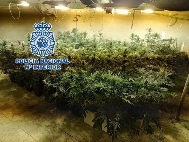 Plantación marihuana Elda - Policía Nacional