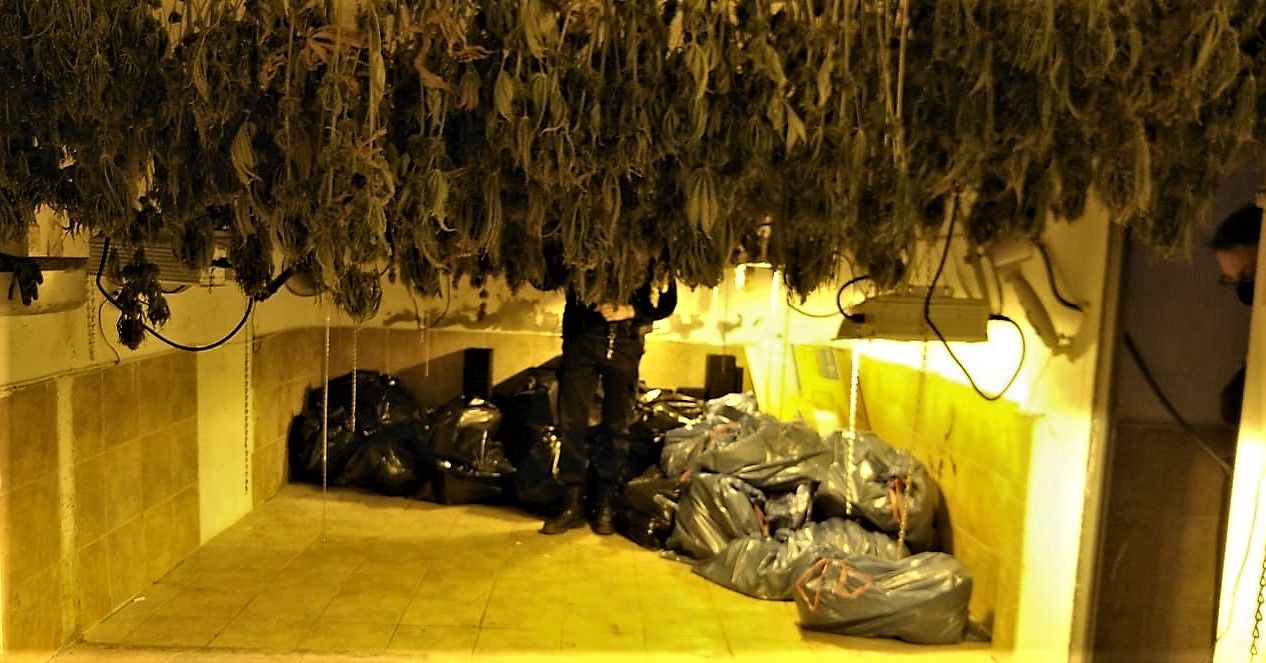 Secadero marihuana Elda